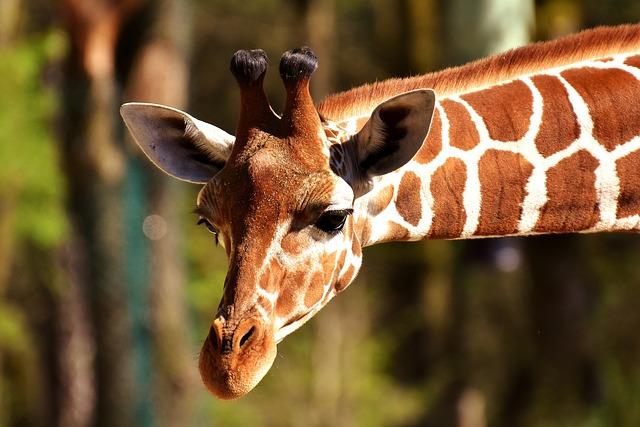 Frivilligt arbejde i udlandet: Bedre end en tur til zoologiske have!